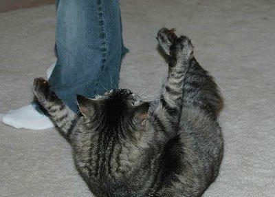 Почему кошка бросается на ноги и кусает за ноги хозяина