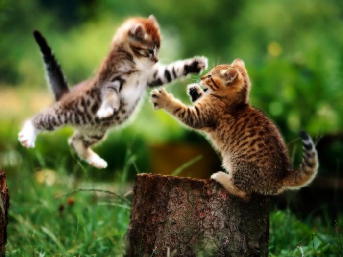 skutočné mačička striekať inthevip orgie