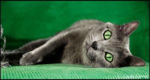 Stehná mačička